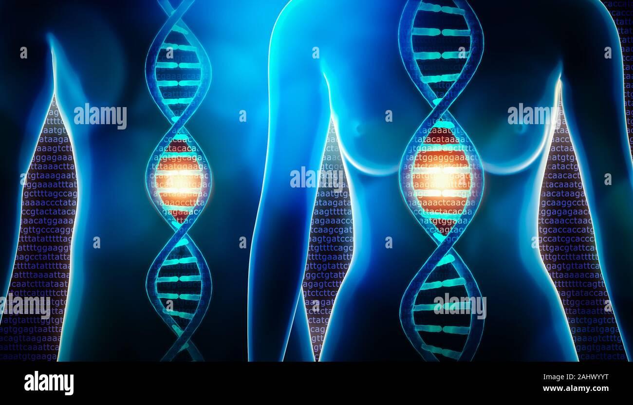Les droits de l'adn double hélice et corps féminins et masculins le rendu 3d illustration. La science, la médecine, la physiologie, la génétique, génome, séquençage, Biolog Banque D'Images
