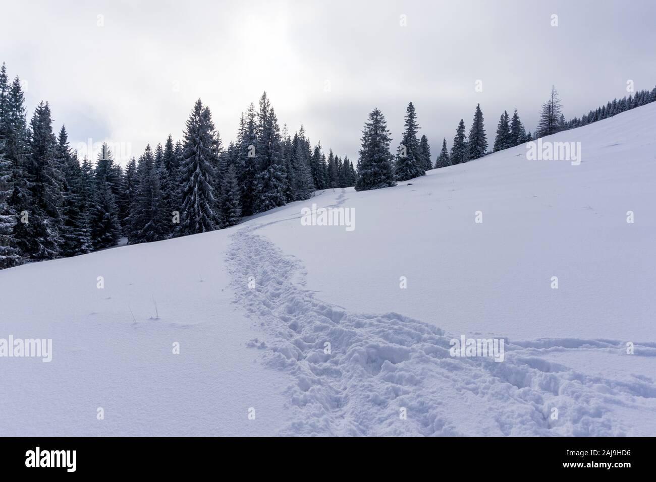 Sentier d'hiver dans la neige. Rusinowa Glade. Les montagnes de Tatra. Banque D'Images