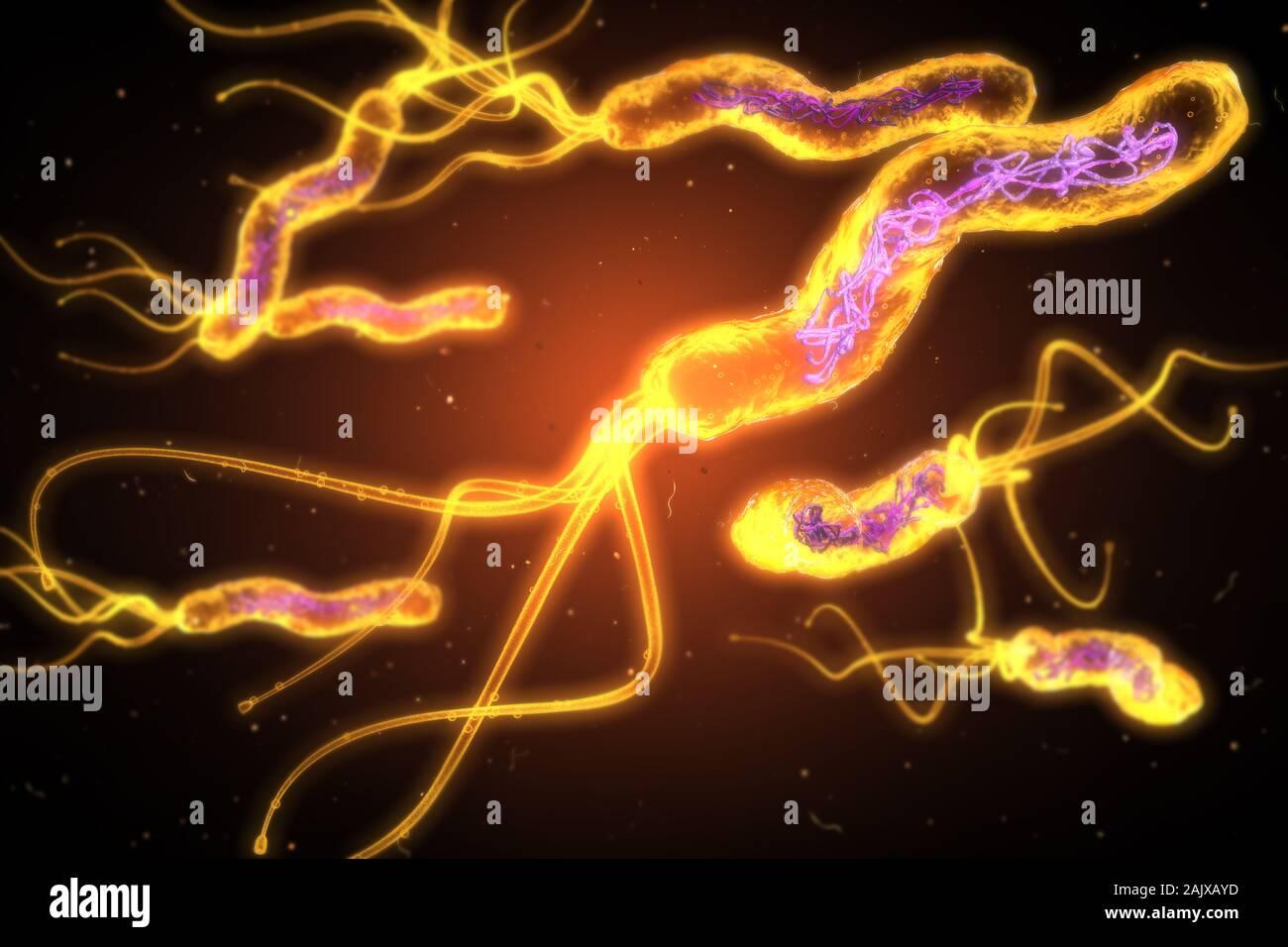 3D illustration montrant Vue microscopique d'un groupe de bactéries Helicobacter pylori Banque D'Images