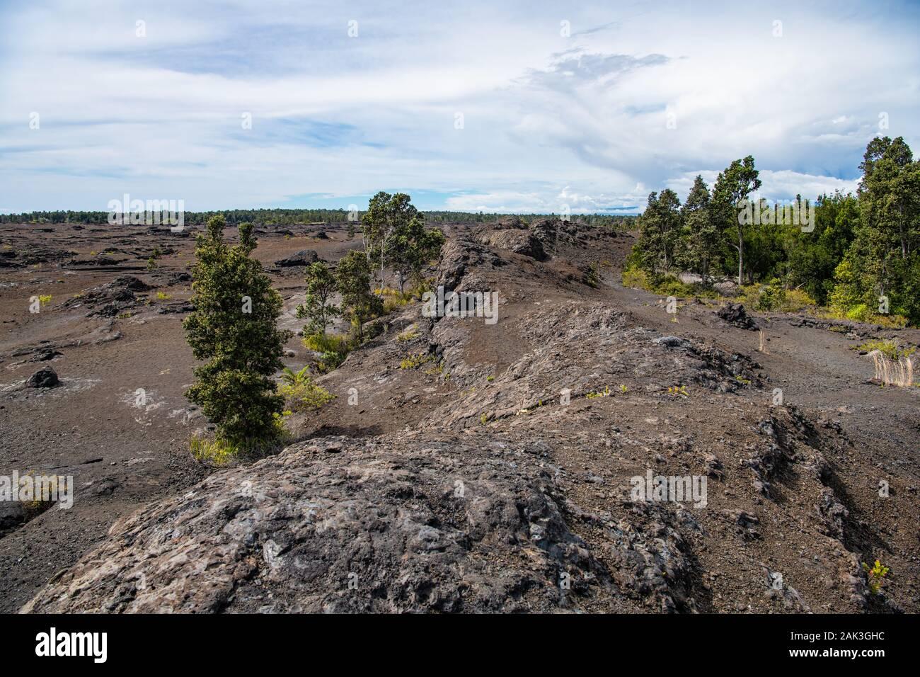 Vue paysage plus ancienne coulée Terrain avec arbres et autres vegitation début de croître et de rétablir eux-mêmes Banque D'Images
