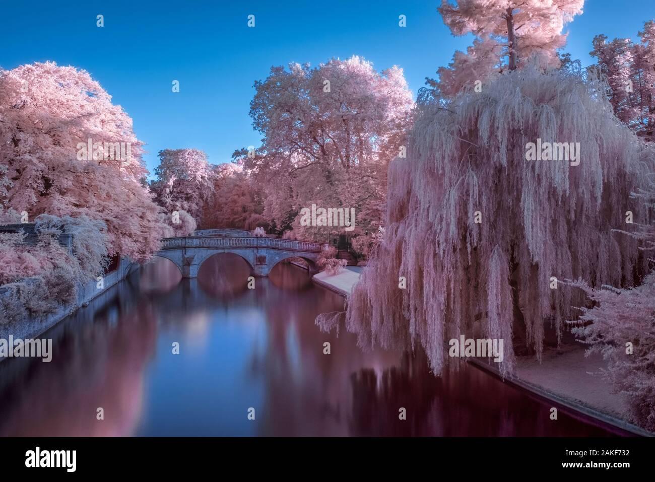 Royaume-uni, Angleterre, Cambridge, Cambridgeshire, le dos, Clare et King's College Ponts sur rivière Cam Banque D'Images
