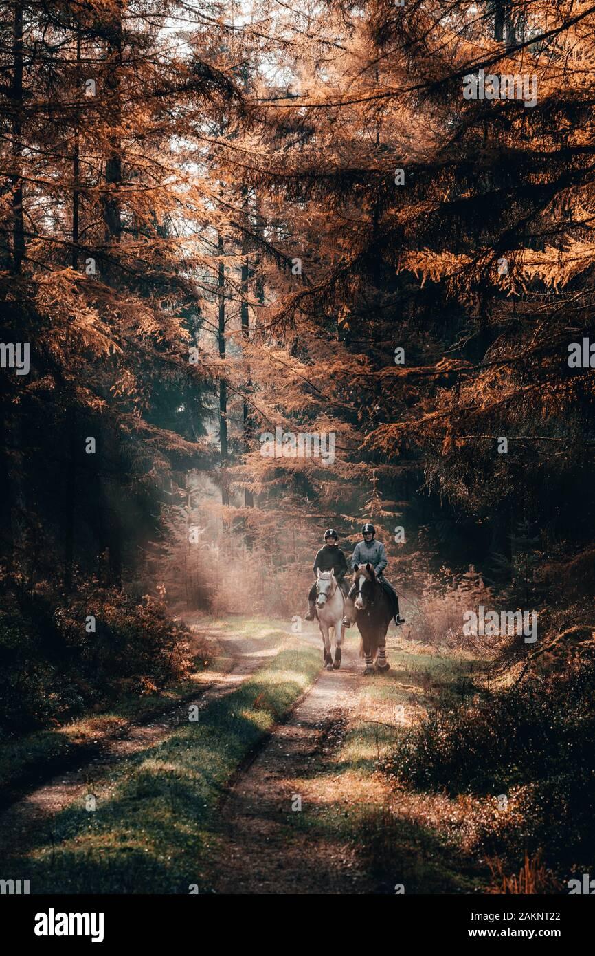 Luneberg, France - Nov 10, 2019: Deux esquestrians monter à cheval dans les forêts de l'automne avec woodand Heide lumière dorée plane sur eux Banque D'Images