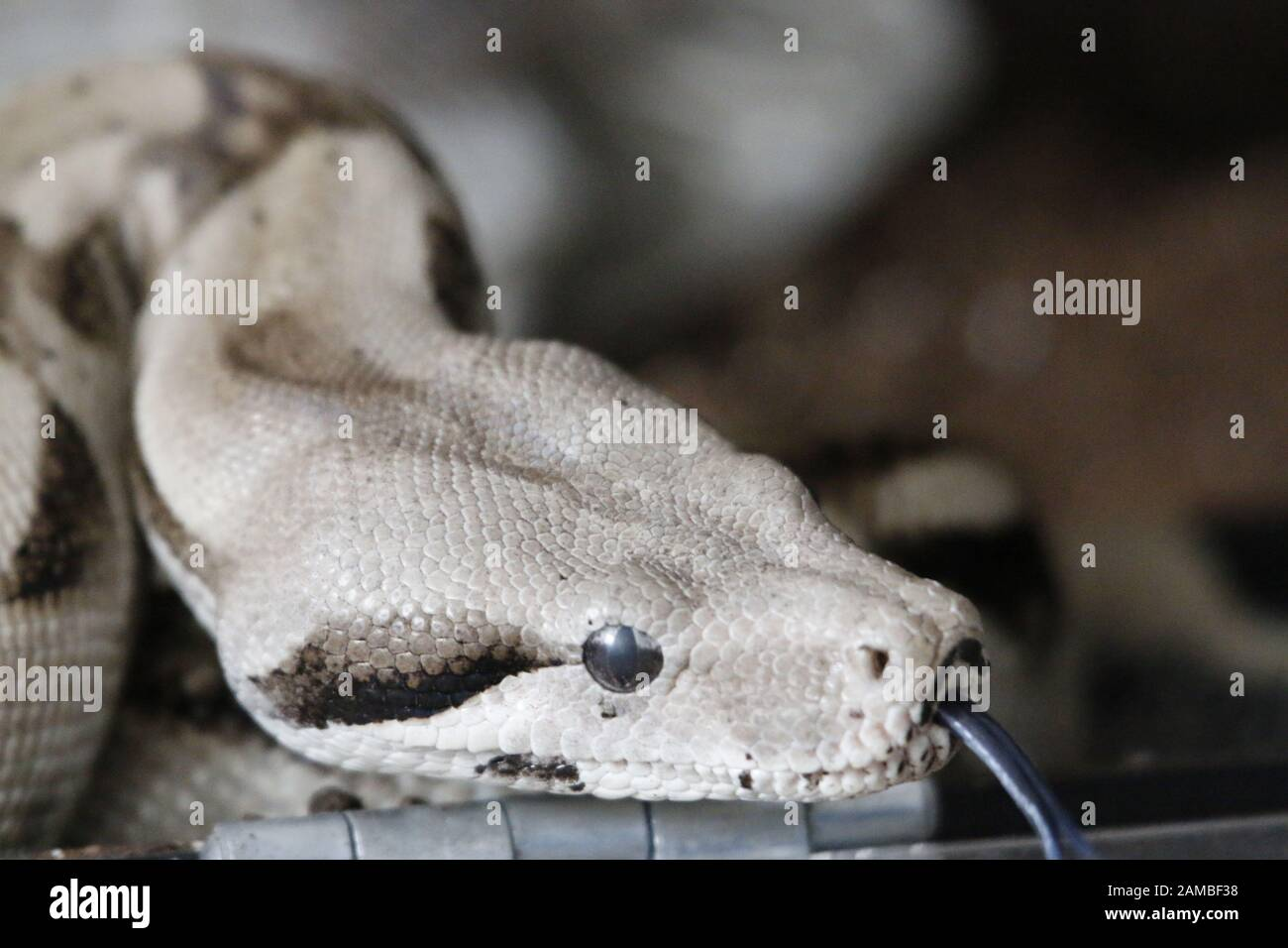 Snake Draw Banque D Image Et Photos Alamy