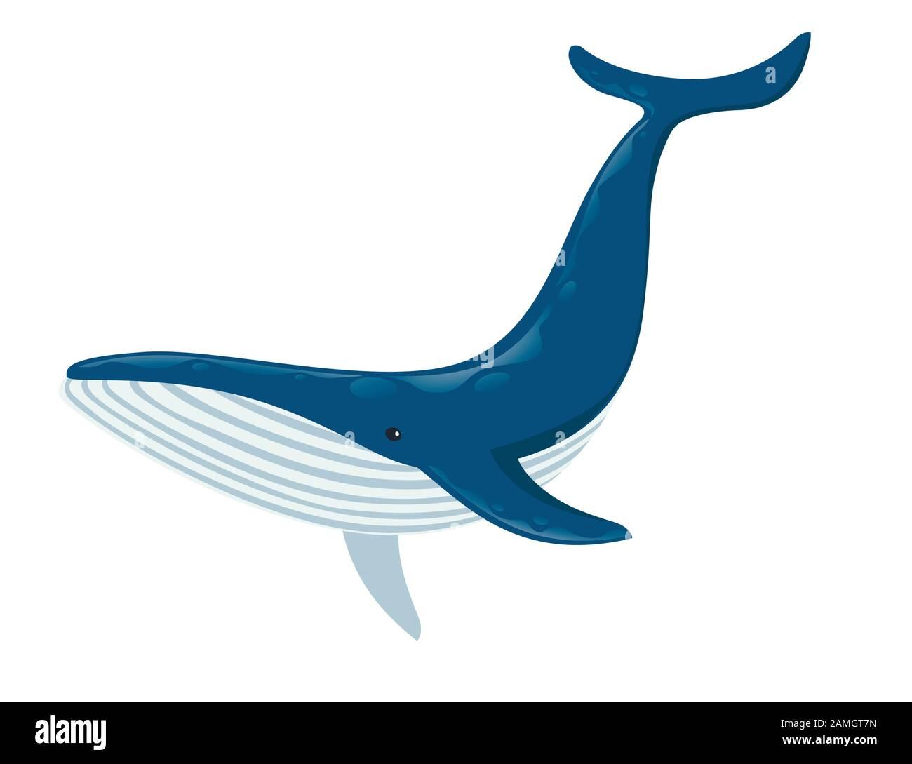 Grande Baleine Bleue Dessin Animal De Caricature Plus Grand Mammifere Sur La Terre Illustration Vectorielle Plate Isolee Sur Fond Blanc Image Vectorielle Stock Alamy