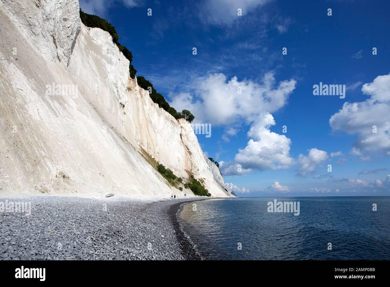 Moens Klint falaises de craie, Møn, Mons Klint, Moen, mer Baltique, Danemark, Scandinavie, Europe Banque D'Images