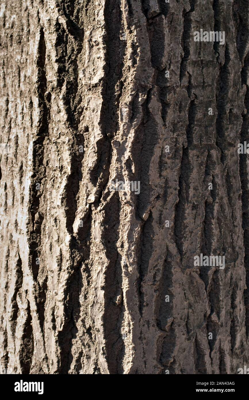Un gros plan de l'évolution de l'écorce des arbres. Image en arrière-plan Banque D'Images