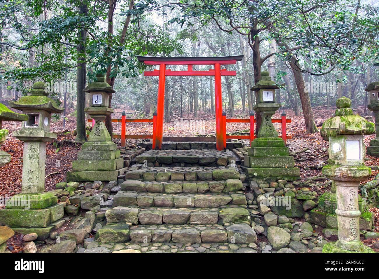 Porte torii au sommet de vieux marches en pierre au Grand Sanctuaire de Kasuga au Japon. Banque D'Images