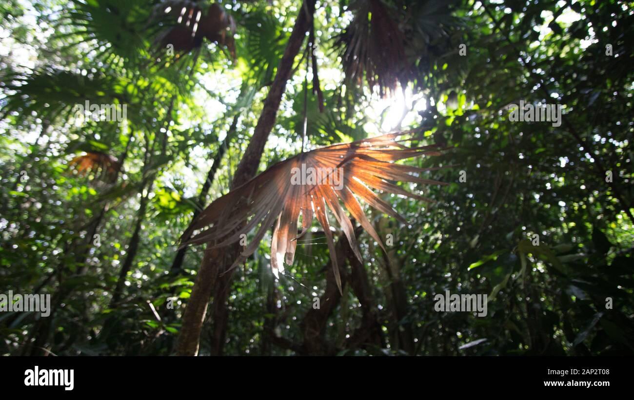 Dans les paumes de bons de Sian Ka'an parc national, Yucatan, Mexique Banque D'Images