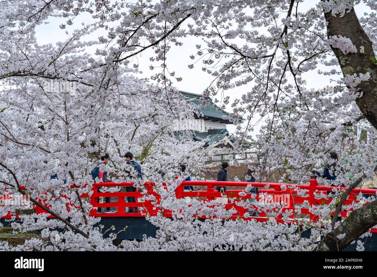 Parc du château de Hirosaki cerisiers en fleurs au printemps saison ensoleillée jour matin. Beauté fleur pleine fleur rose sakura fleurs à la moat intérieure. Préfecture D'Aomori Banque D'Images