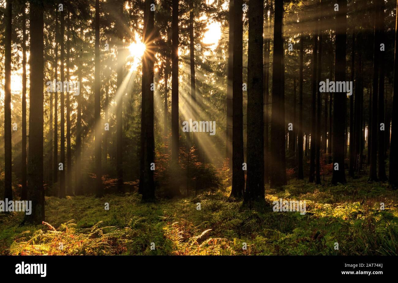 Morgendliche Sonnenstrahlen im herbstlichen Süntel Banque D'Images