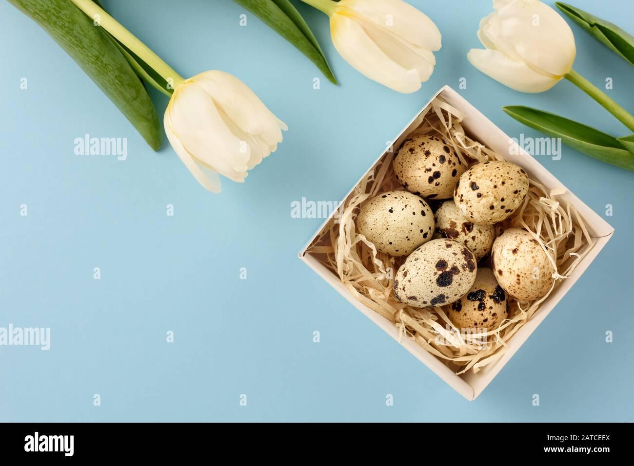 Pâques toujours la vie. Boîte avec œufs de caille et tulipes sur fond bleu. Espace de copie. Banque D'Images