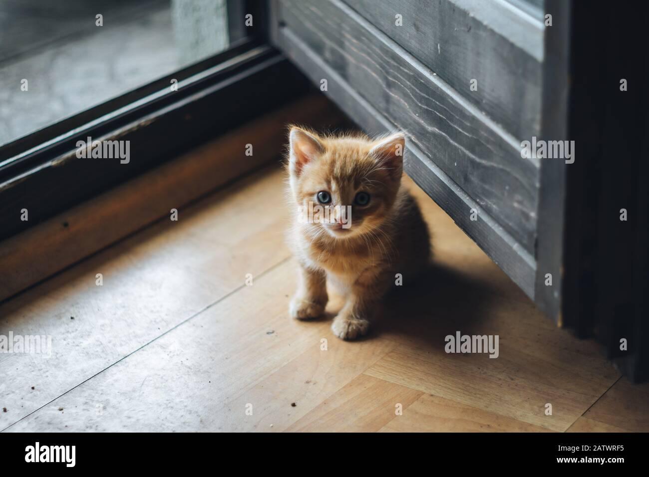 Petit chaton bleu orange Banque D'Images