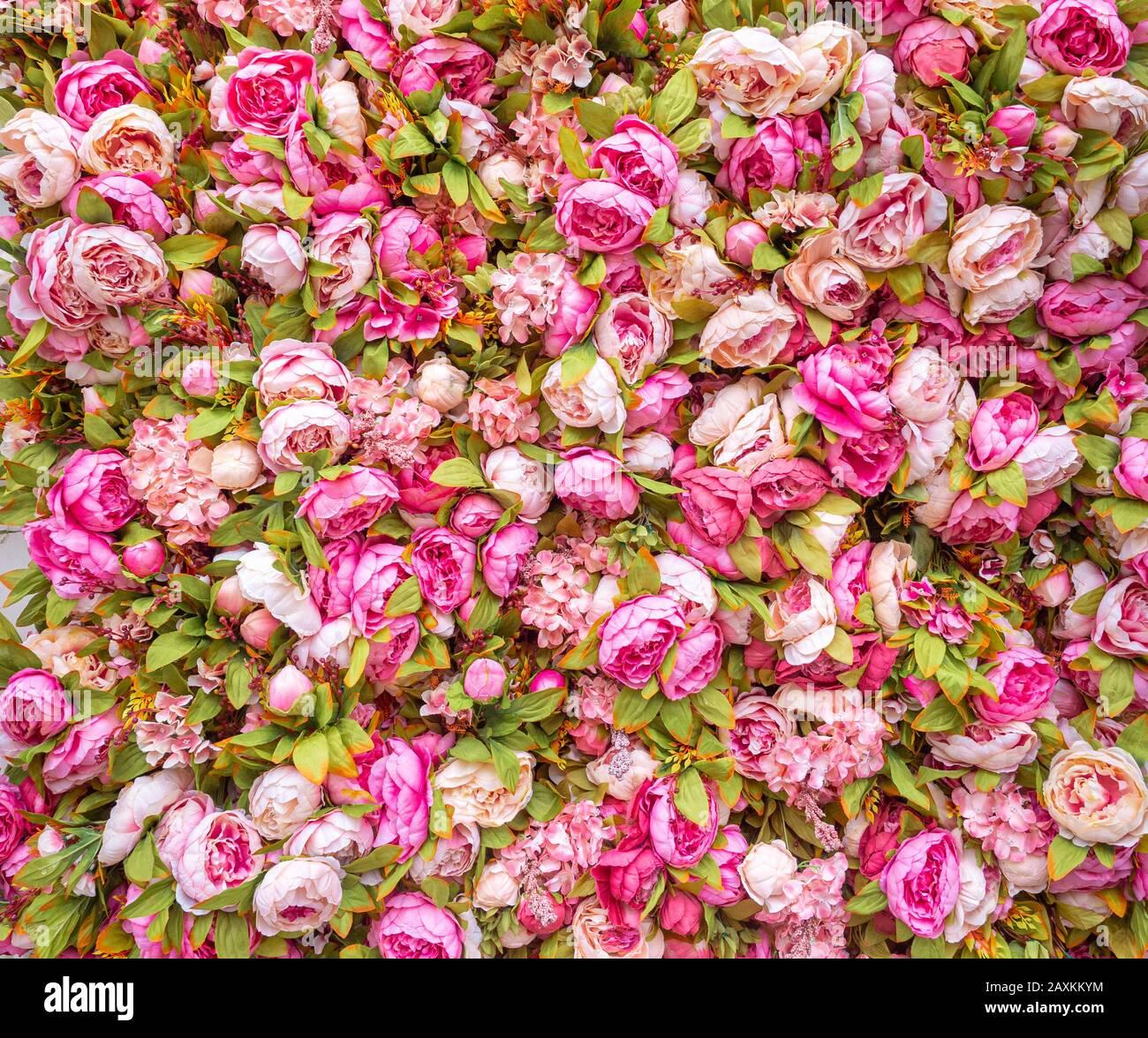 Magnifique toile de fond de pivoines roses artificielles. Décoration festive de mariage. Fond rose floral. Fleurs roses fond Banque D'Images