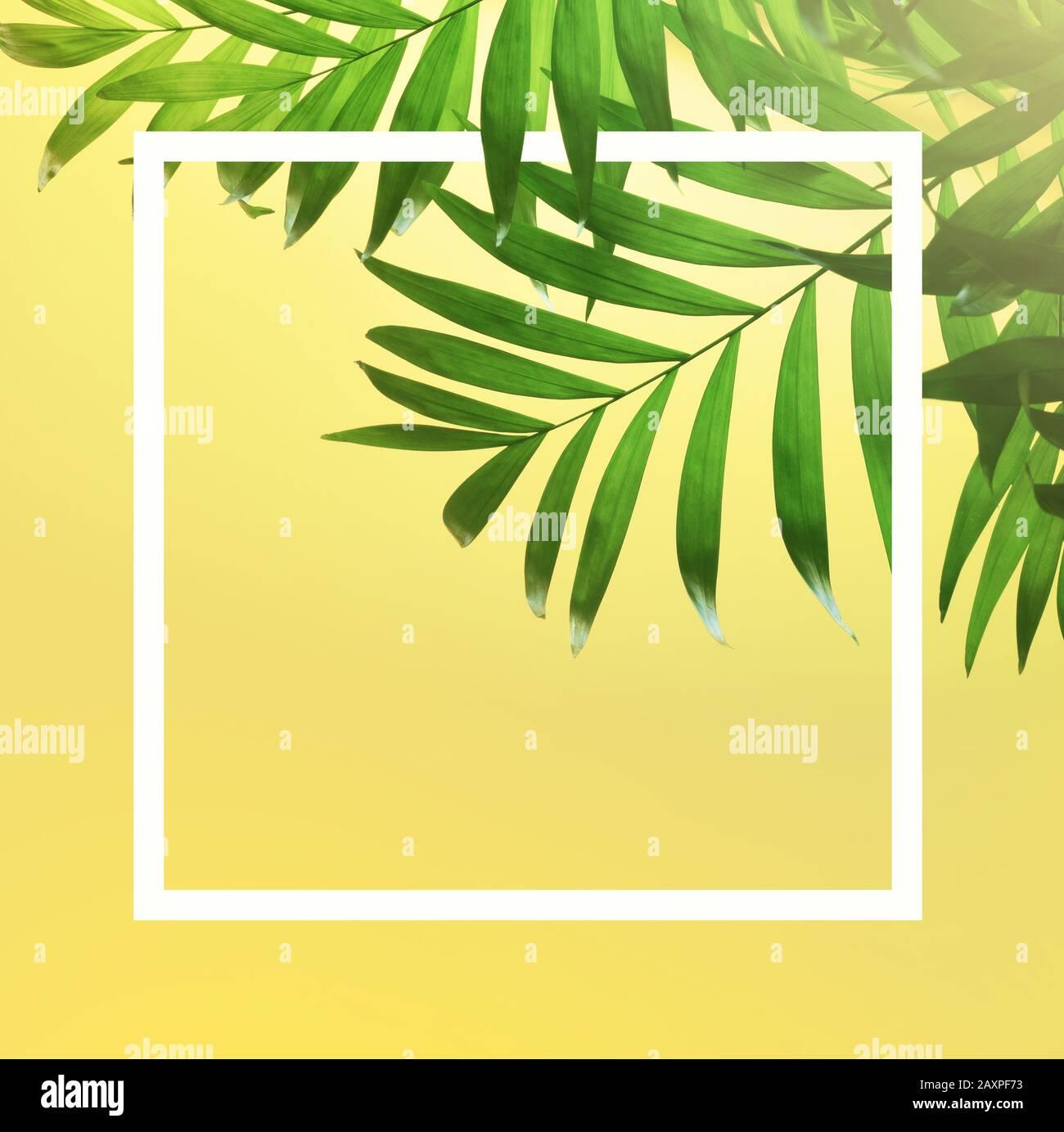 feuille de palmier tropicale vert foncé sur fond jaune. Banque D'Images
