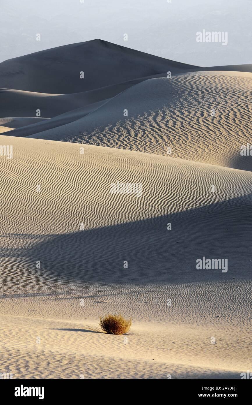 Dunes De Mesquite Flat, Au Lever Du Soleil, Parc National De La Vallée De La Mort Banque D'Images