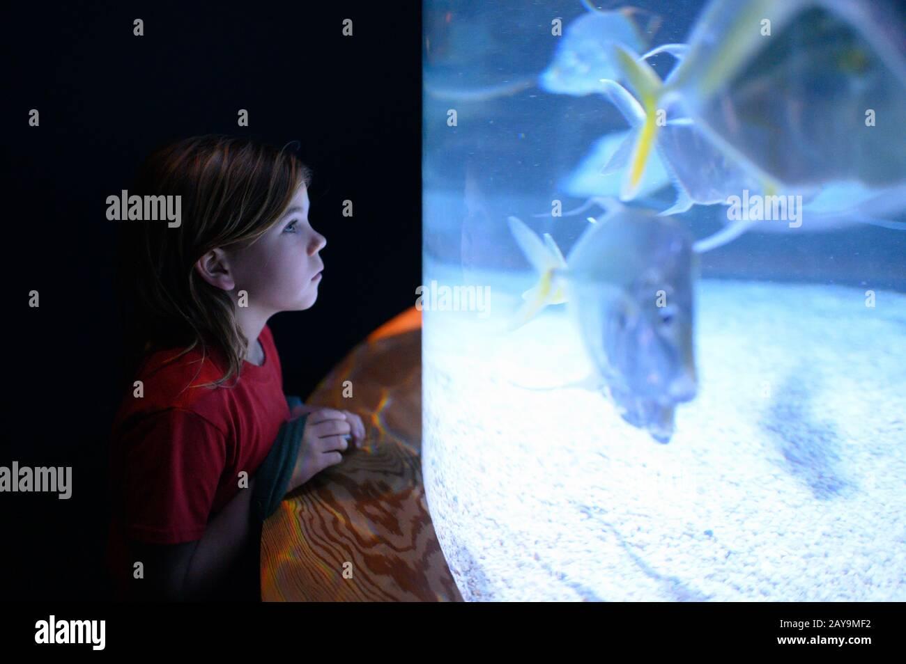 Profil du garçon en chemise rouge regardant le réservoir de poisson dans l'aquarium Banque D'Images