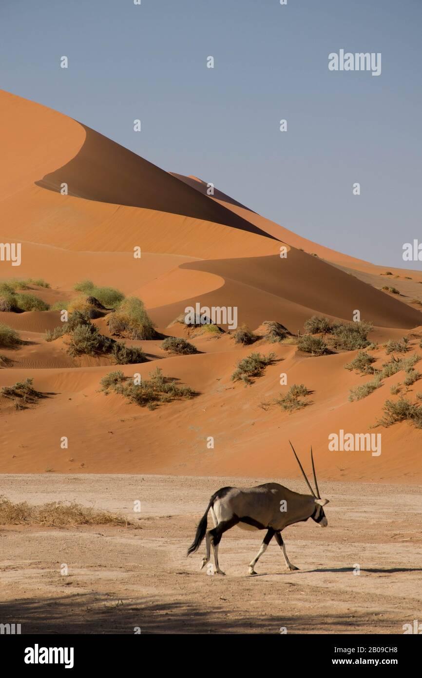 Oryx devant une dune, dans le désert du namib en Namibie. Sossusvlei Banque D'Images