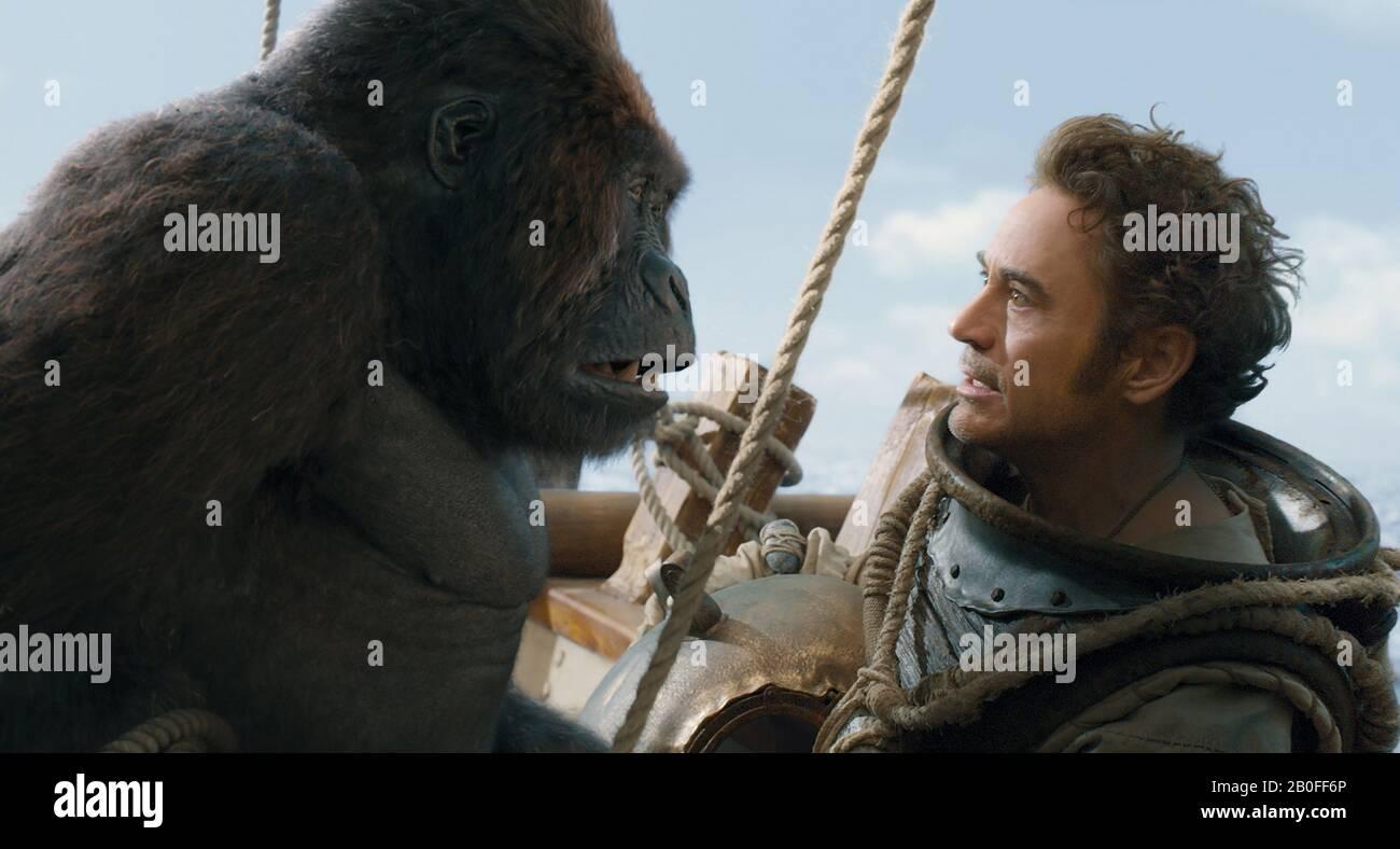 Gorille, Singe, Gorille De Montagne PNG - Gorille, Singe, Gorille De  Montagne transparentes   PNG gratuit