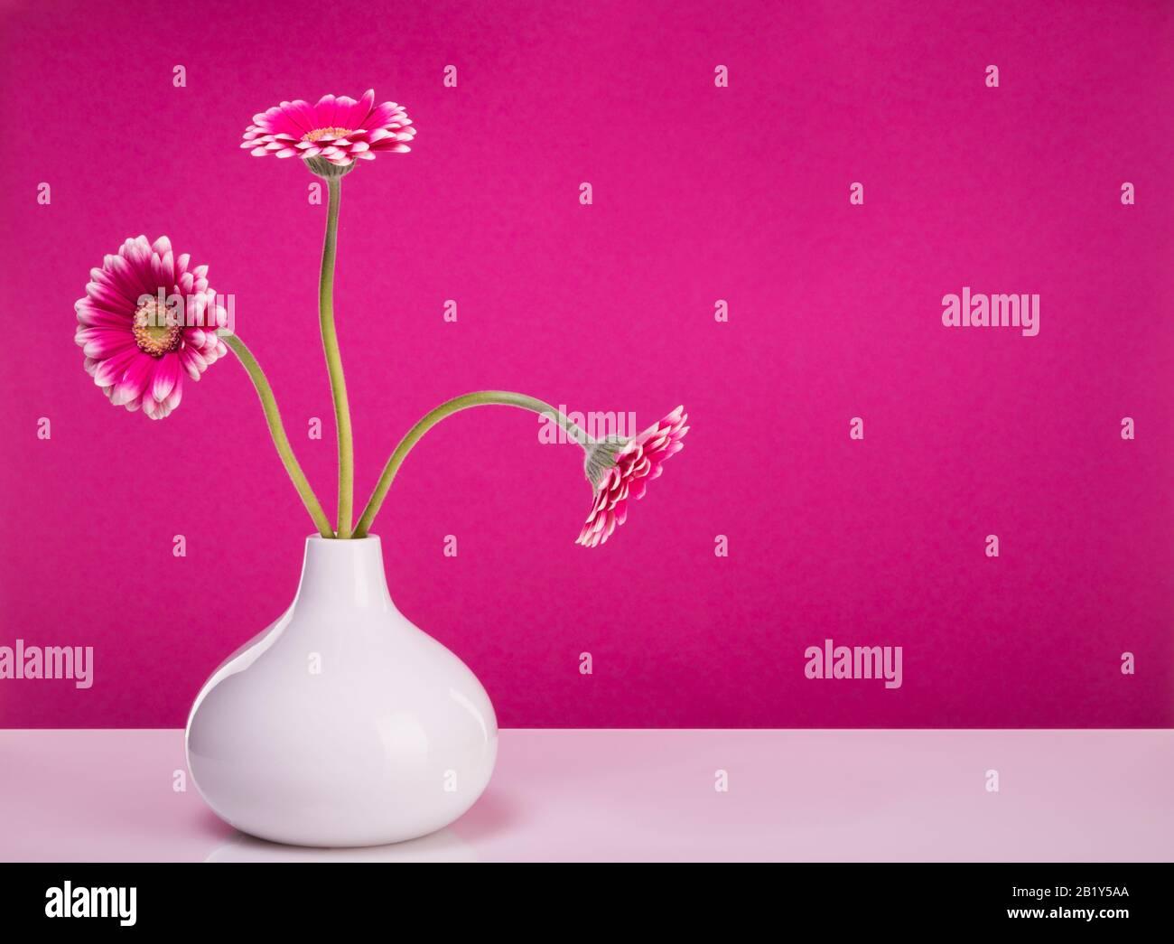Trois gerber roses fleurit dans un vase en forme de goutte devant le mur violet, toujours avec espace de copie Banque D'Images