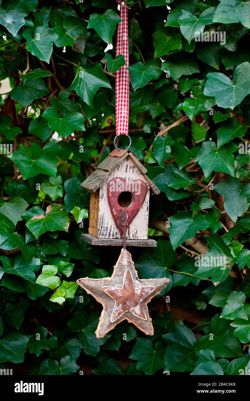 Petite maison d'oiseaux avec entrée en forme de coeur et étoile devant un mur couvert de lierre Banque D'Images