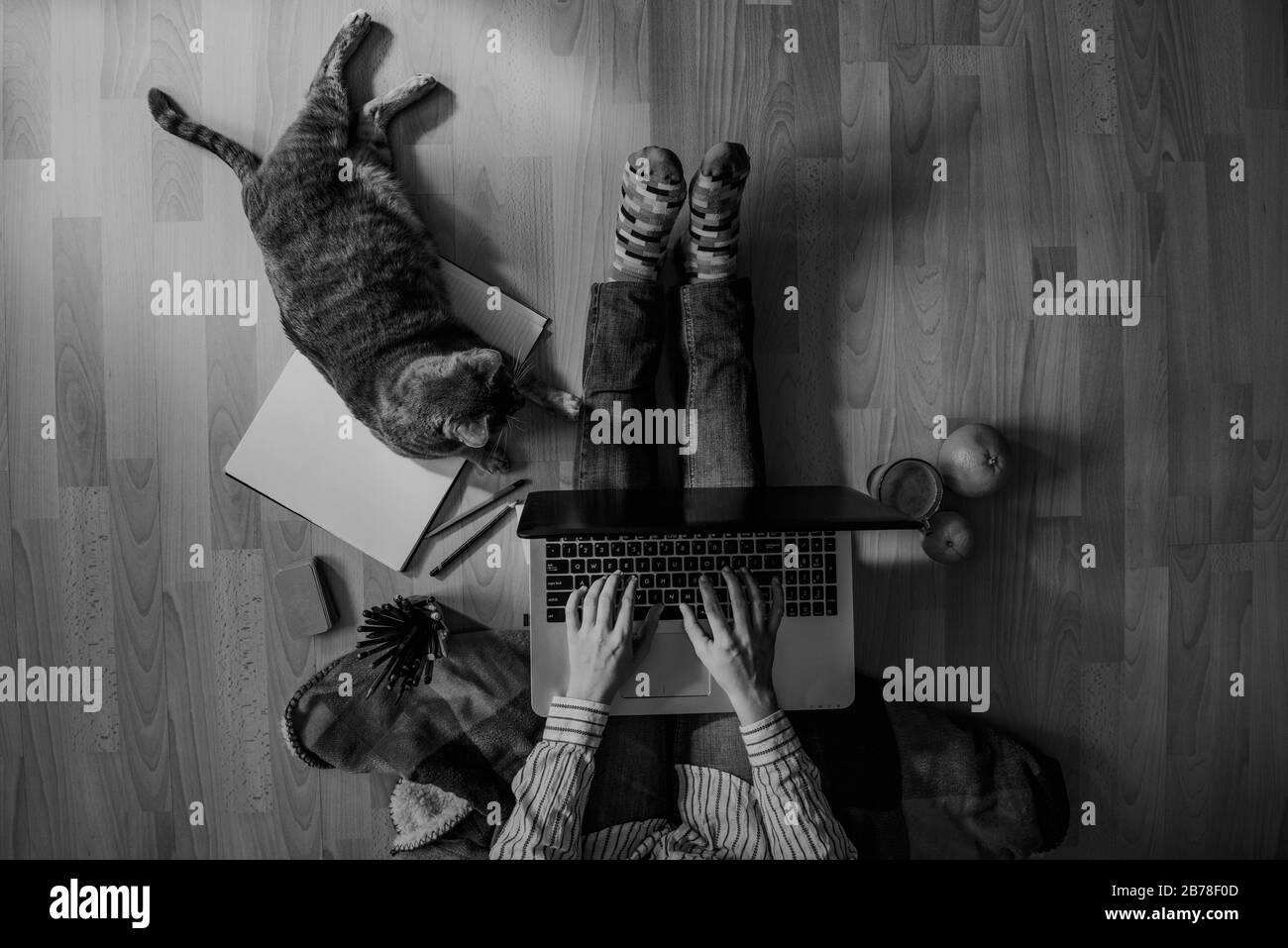 espace de travail à domicile créatif - travail à partir du concept à la maison - fille avec chat Banque D'Images