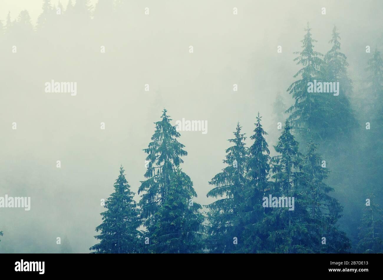 Misty Foggy Mountain paysage avec dans la forêt de sapin hipster vintage retro style Banque D'Images