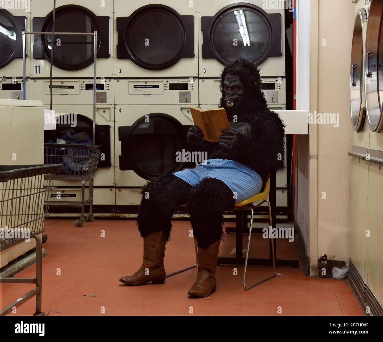 Une personne en costume de gorille est assise dans une chaise seule à une laverie automatique lisant un livre pour un concept de loisirs humoristique. Banque D'Images