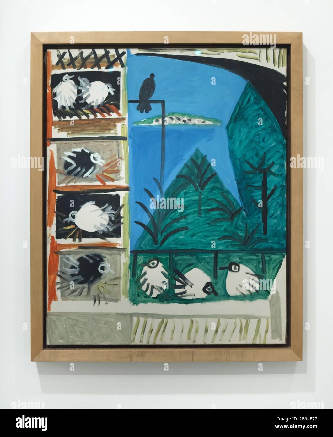 """Peinture """"les Pigeons"""" de Pablo Picasso peinte à Cannes (France) le 7 septembre 1957 sur exposition au Museuu Picasso (Musée Picasso) à Barcelone, Catalogne, Espagne. Banque D'Images"""