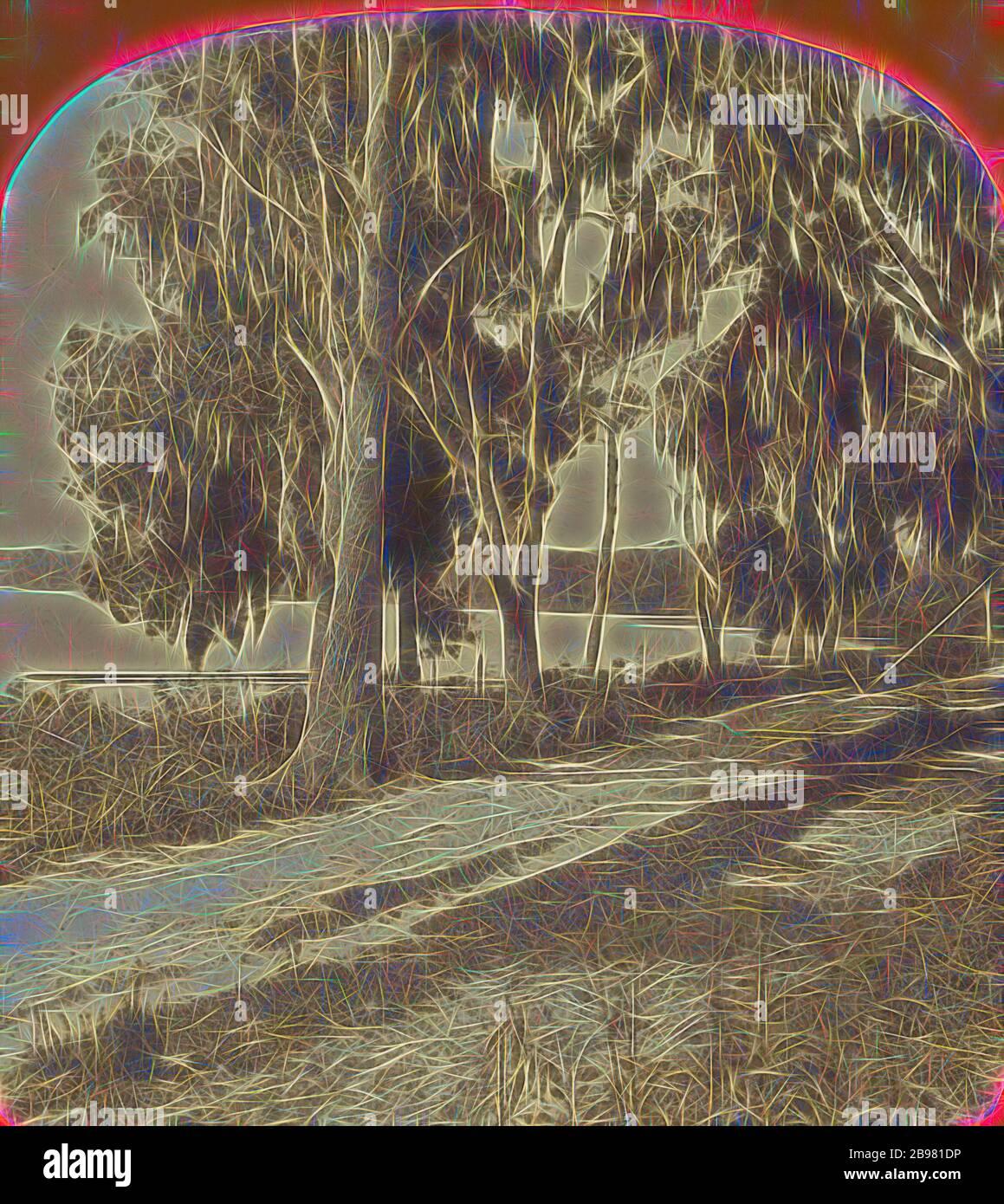 Rivière St. Johns, Palatka., A.D. White (américain, active 1870s), 1870s, imprimé argent par albumine, repensé par Gibon, conception de lumière chaude et gaie rayonnant de la luminosité et de rayons de lumière radiance. L'art classique réinventé avec une touche moderne. Photographie inspirée par le futurisme, embrassant l'énergie dynamique de la technologie moderne, le mouvement, la vitesse et révolutionnez la culture. Banque D'Images