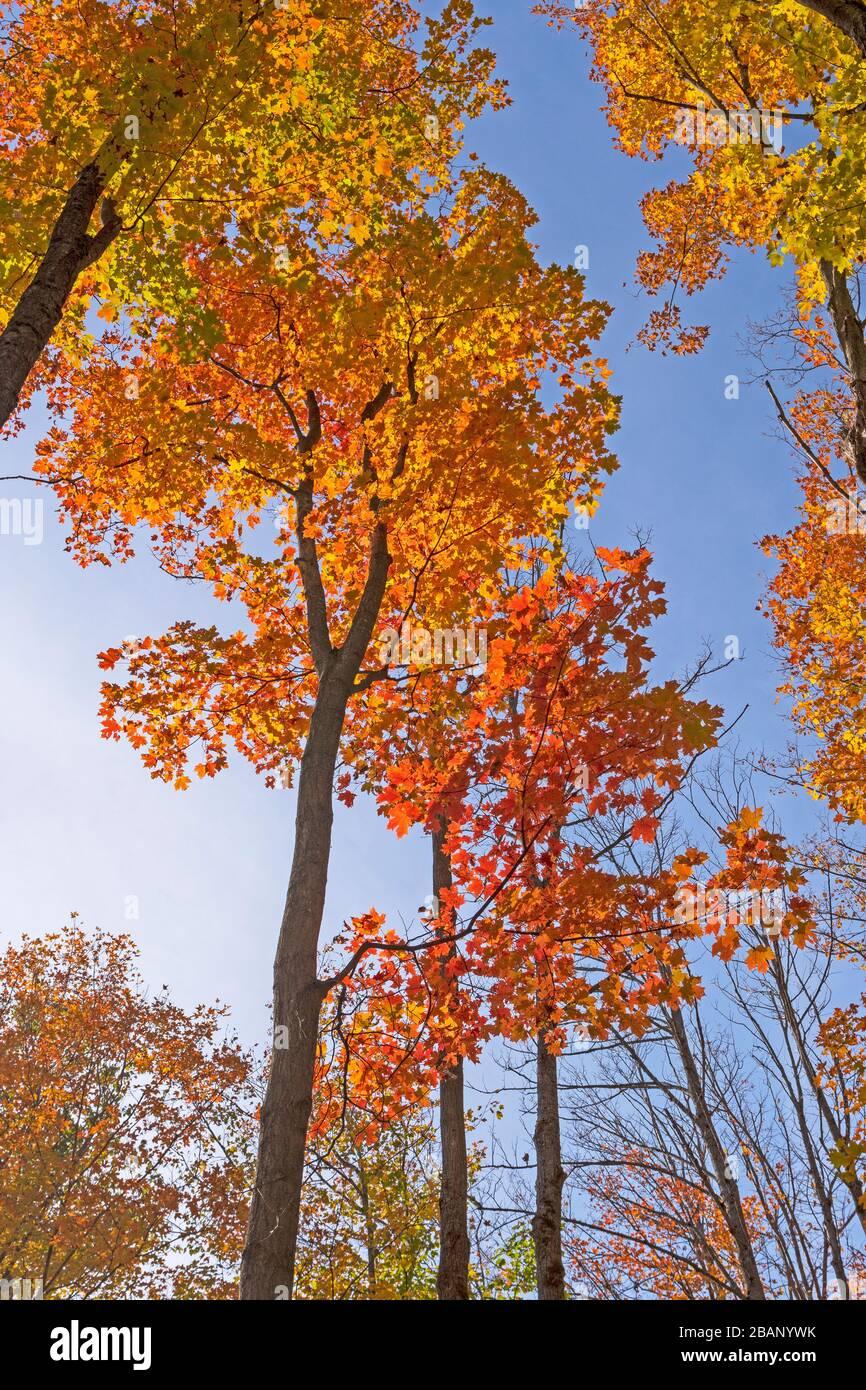 Transitions de couleur contre un ciel bleu dans la réserve naturelle Louis M Groen à Johannesburg, Michigan; Banque D'Images