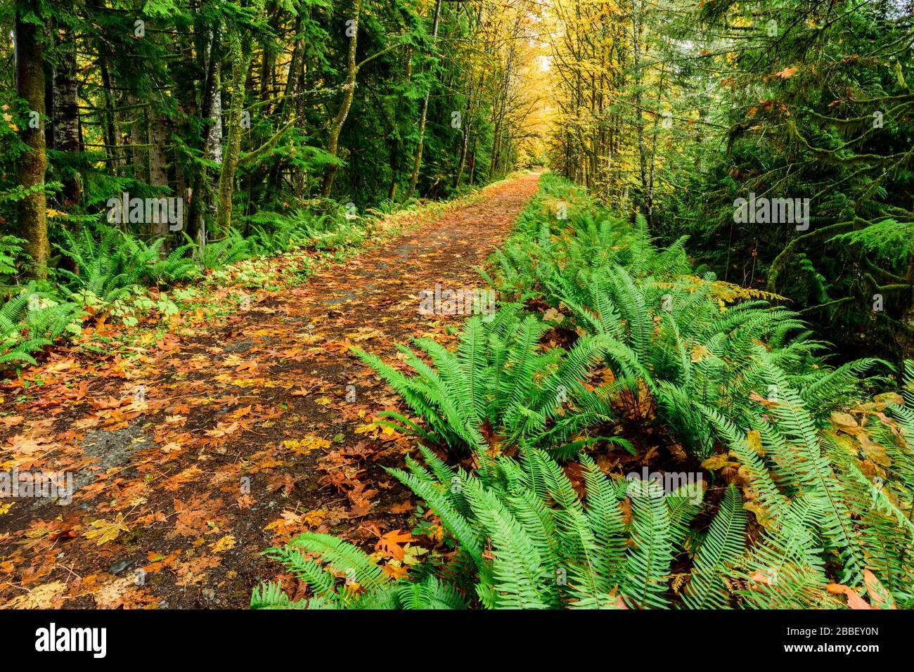 La route de la vallée Cowichan, près du ruisseau Holt Trestle, à Glenora, en Colombie-Britannique. Banque D'Images