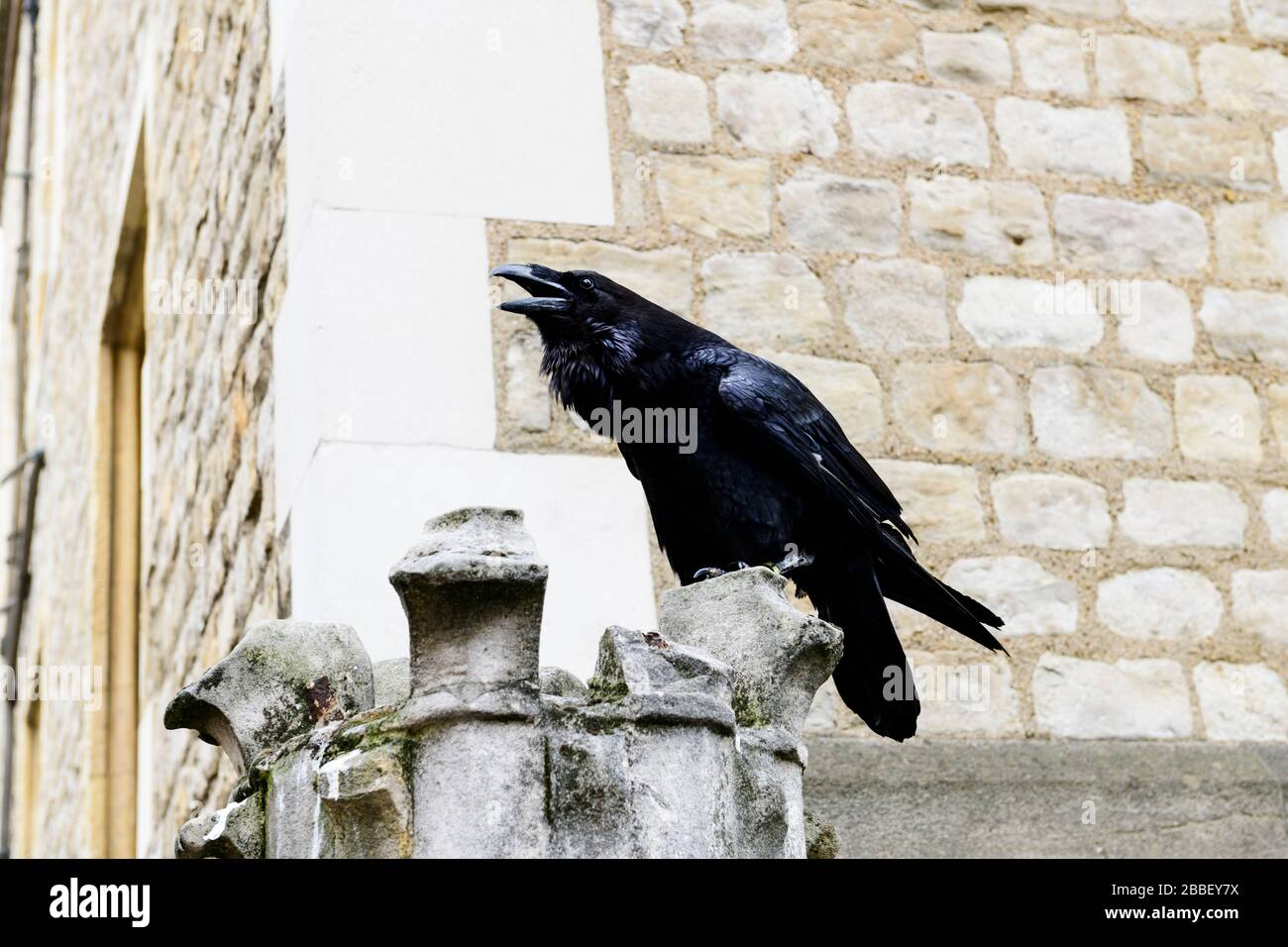 Un corbeau noir à l'intérieur de la Tour de Londres à Londres, en Angleterre Banque D'Images