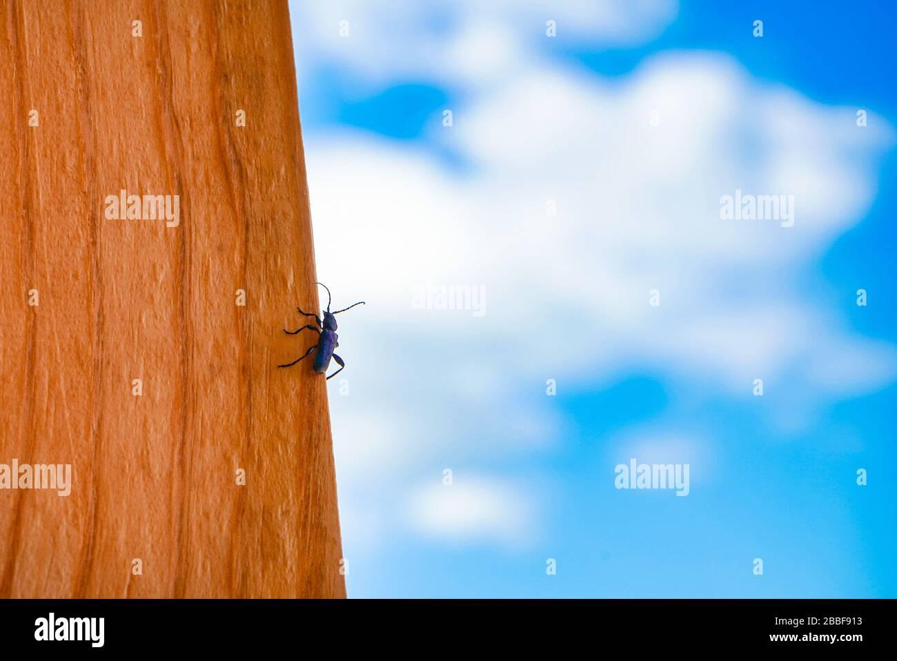 Dendroctone sur un panneau de bois contre le ciel Banque D'Images