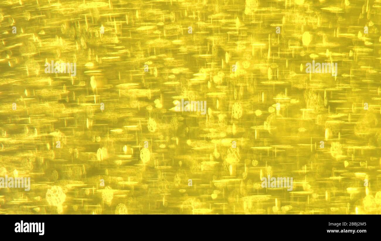 Fond doré beaucoup de reflets. Feux d'or Banque D'Images