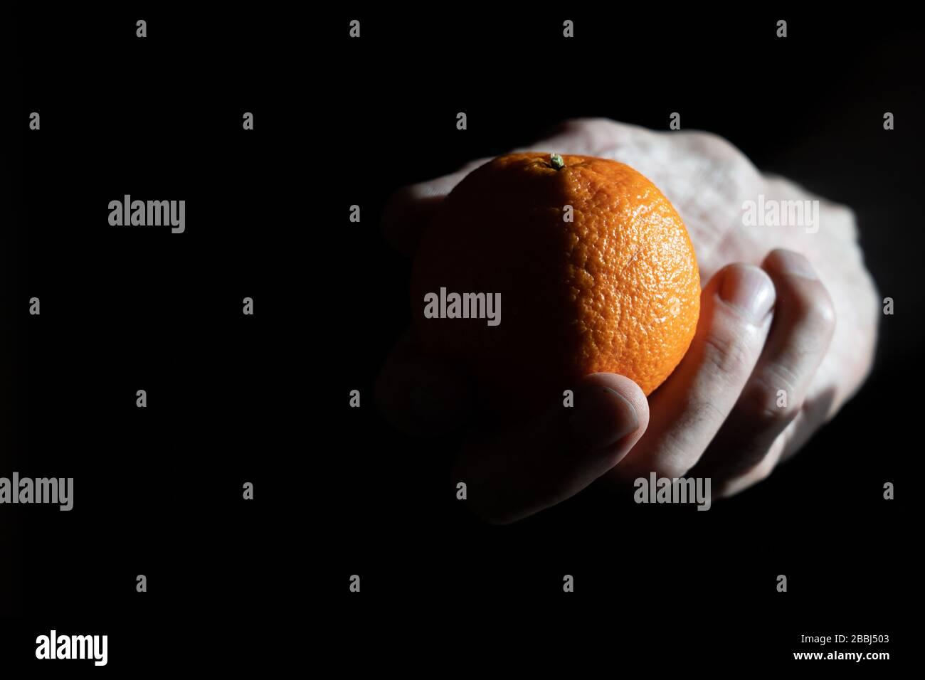 Les tangerines dans une main sur un fond sombre mandarine dans une main de l'homme sur un fond sombre. Des ombres profondes et nettes à partir d'une lumière vive Banque D'Images