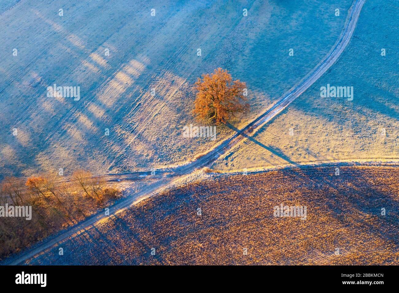 Chemins de champ et chêne avec givre le matin, près de Icking, drone shot, Haute-Bavière, Bavière, Allemagne Banque D'Images