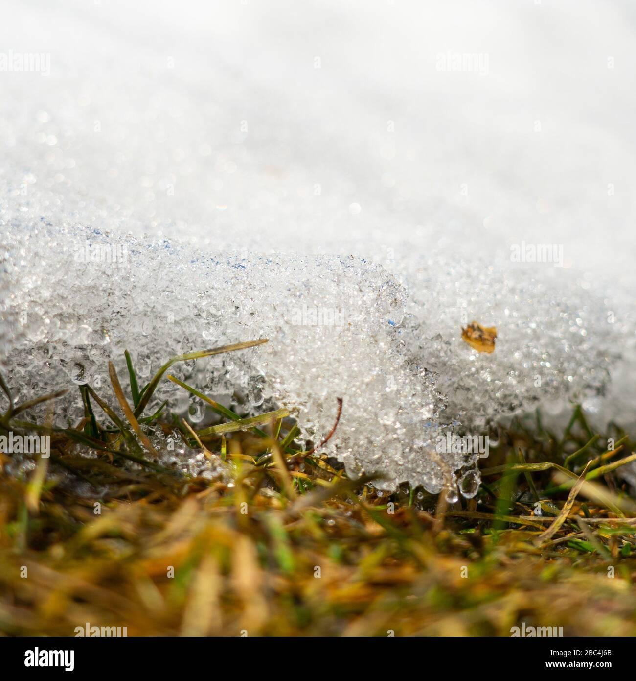 Fonte de neige. Gros plan. La glace est éclairée par la lumière du soleil. La photo a été prise dans l'après-midi Banque D'Images