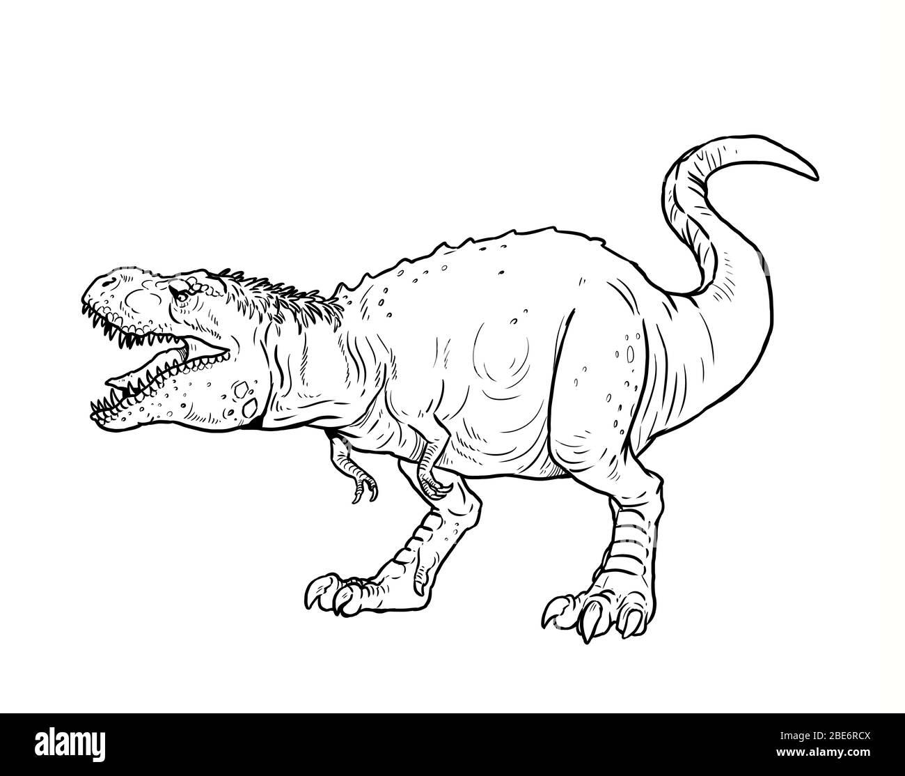Tyrannosaurus Rex Anatomy Banque D Image Et Photos Alamy