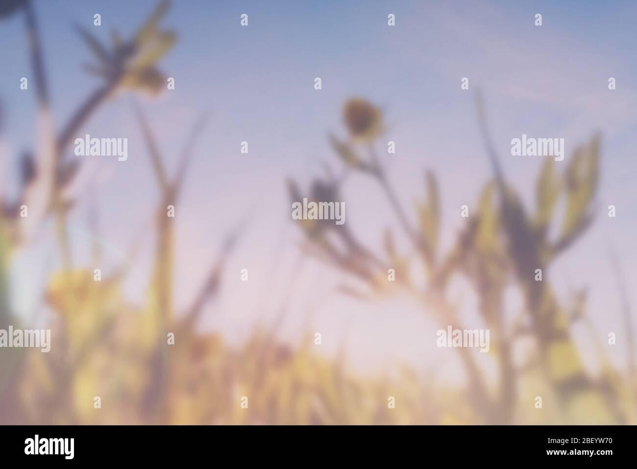 Une double exposition avec des fuites de lumière vintage d'une vue rapprochée de papillons floutés (Ranunculus) avec un résumé, le rêve expérimental comme le montage. Banque D'Images