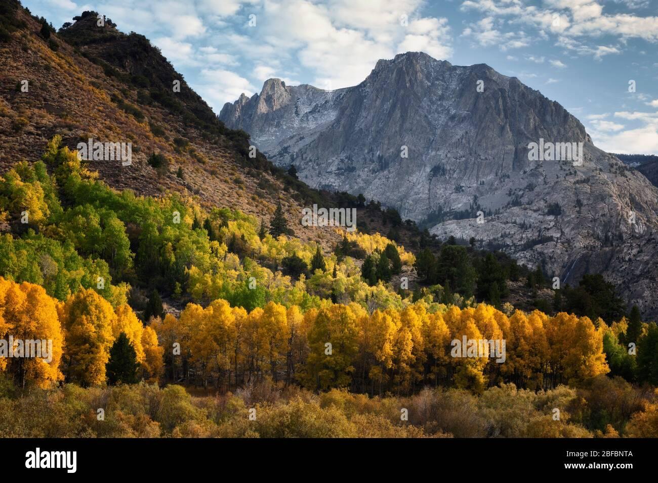 La poussière de neige sur les montagnes de la Sierra orientale ajoute à la beauté des arbres à trembles en automne le long de la boucle du lac de juin en Californie dans le comté de Mono. Banque D'Images