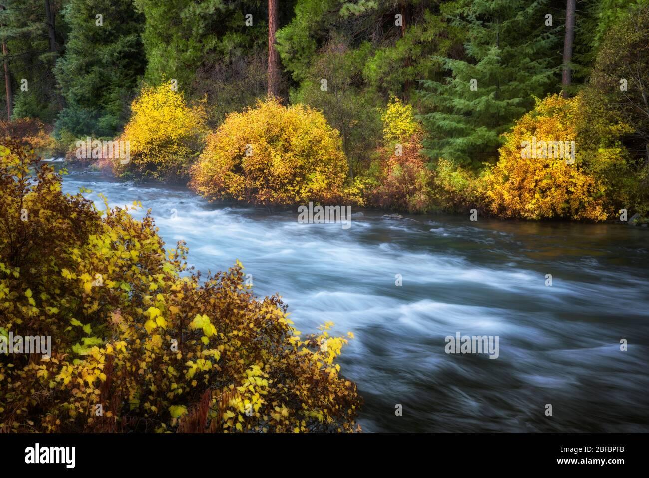 La rivière Wild & Scenic Metolius se déverse dans des couleurs éclatantes de l'automne près de Camp Sherman dans le comté de Jefferson, dans le centre de l'Oregon. Banque D'Images