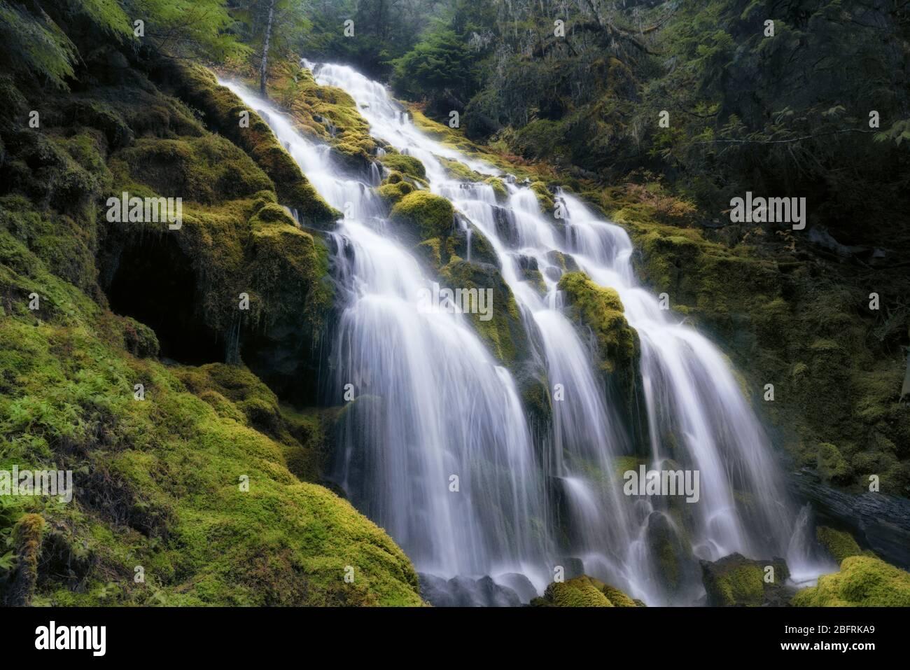 Les chutes de Upper Proxy se répandent sur des mousses ont couvert le basalte en colonnes dans le comté de Three Sisters Wilderness et Lane de l'Oregon. Banque D'Images