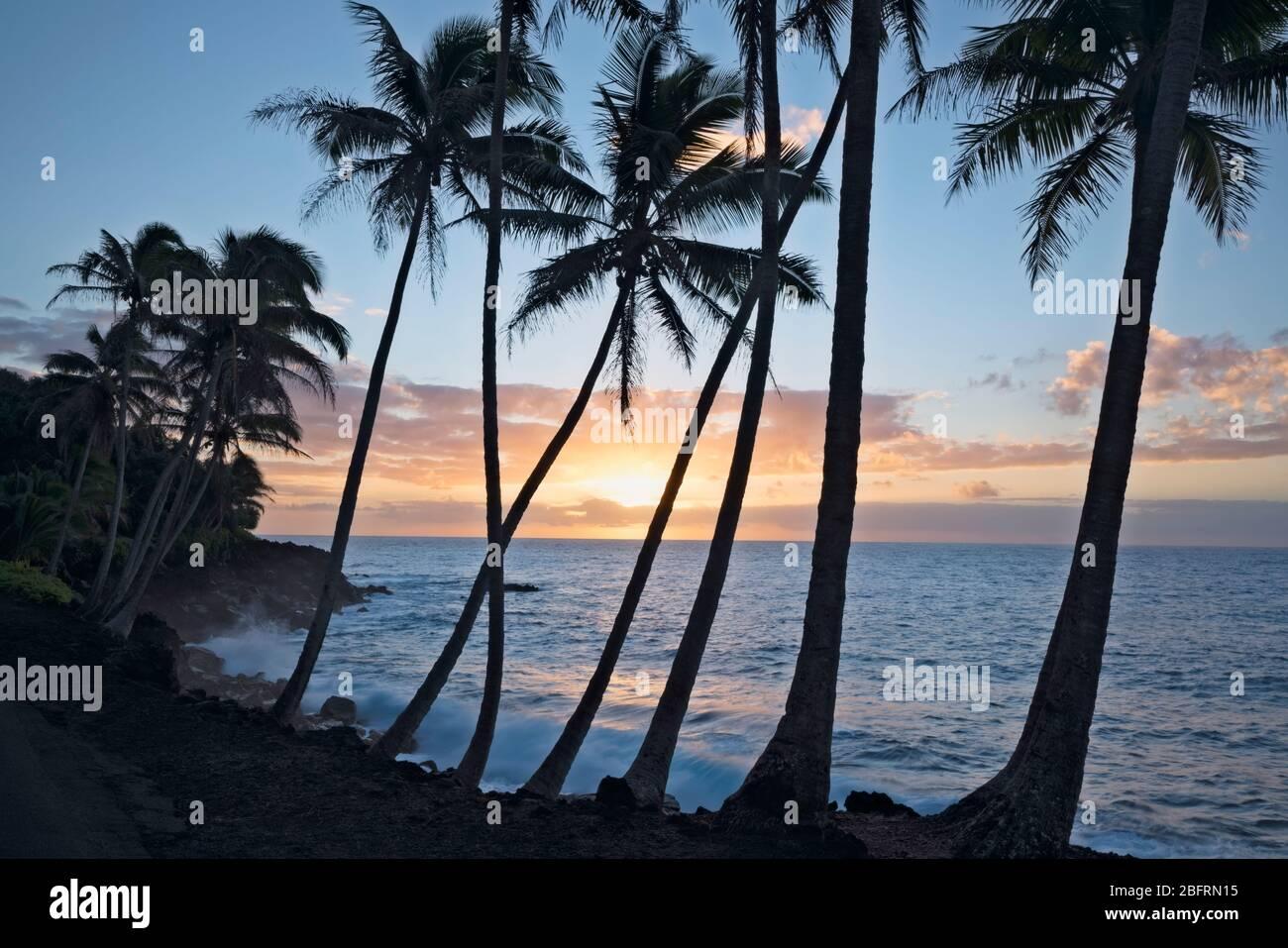Lever du soleil silhouettes le littoral de Puna borde le palmier sur la Grande île d'Hawaï. Banque D'Images