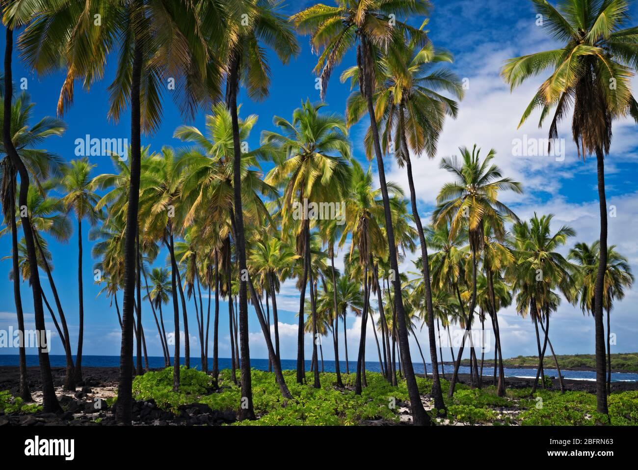 La beauté tropicale le long de la côte de Kona, à l'endroit de refuge National Historical Park sur la grande île d'Hawaï. Banque D'Images