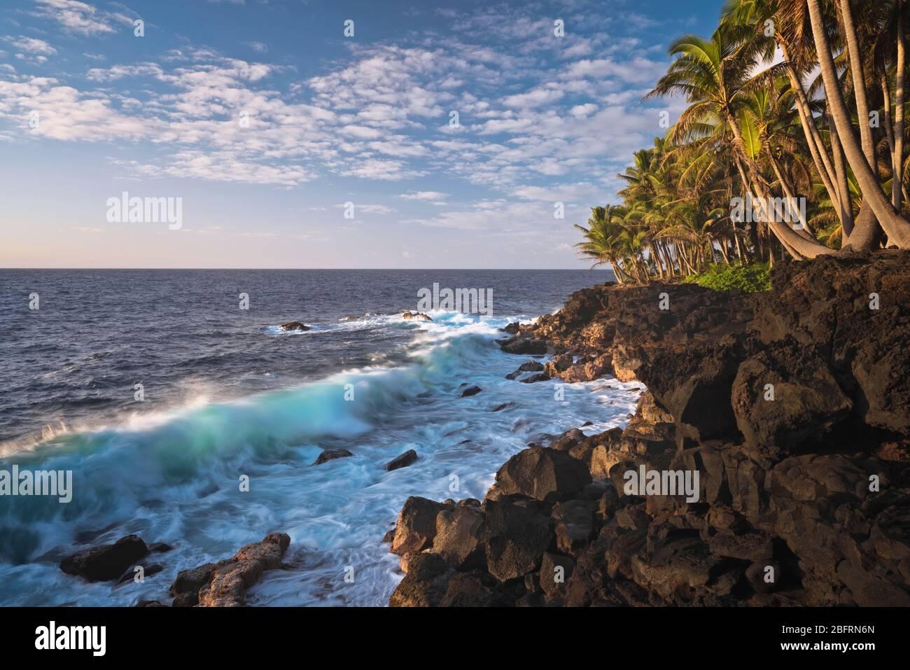 Les vagues lumineuses du matin s'écrasent contre la rive de lave et la côte de Puna bordée de palmiers sur la Grande île d'Hawaï. Banque D'Images