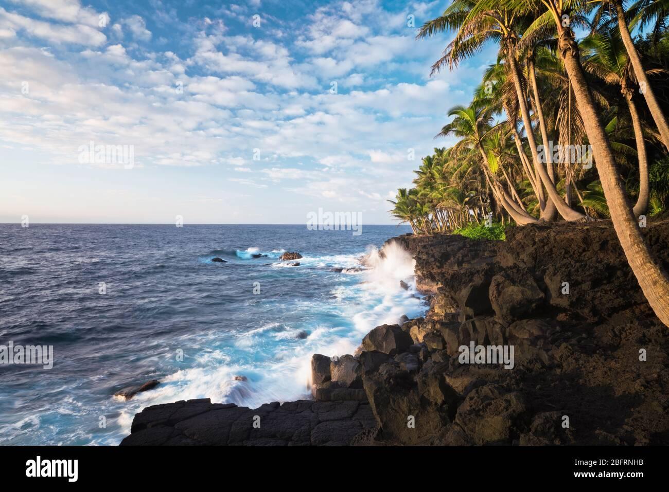 Beauté matinale avec des vagues de crash contre le littoral de lave et la côte de Puna bordée de palmiers sur la Grande île d'Hawaï. Banque D'Images