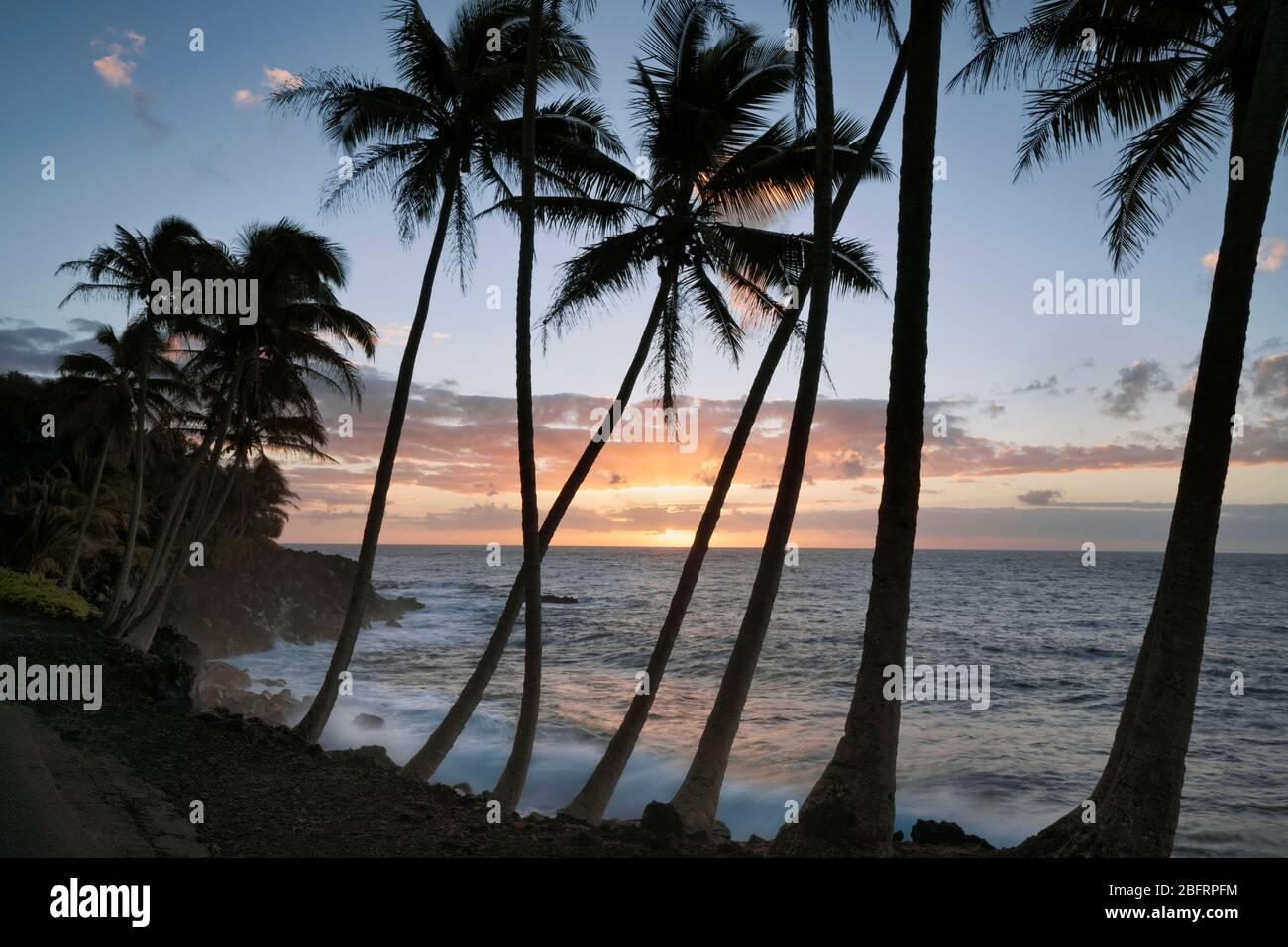 Le lever du soleil coloré révèle des vagues qui s'écrasent contre le littoral de lave et la côte de Puna bordée de palmiers sur la Grande île d'Hawaï. Banque D'Images