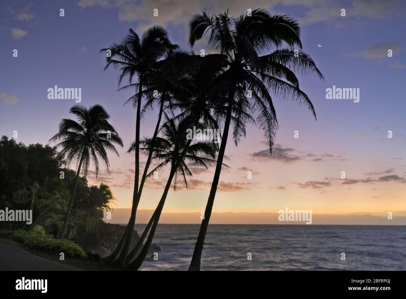 Crépuscule civil avant l'aube avec le cadre croissant de lune et silhouetted Puna palmiers côtiers sur la Grande île d'Hawaï. Banque D'Images