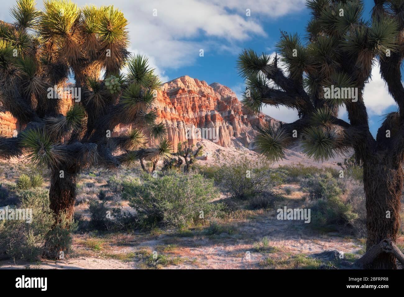 Lumière du matin sur les falaises érodées colorées parmi les Joshua arbres au Red Rock Canyon State Park de Californie. Banque D'Images