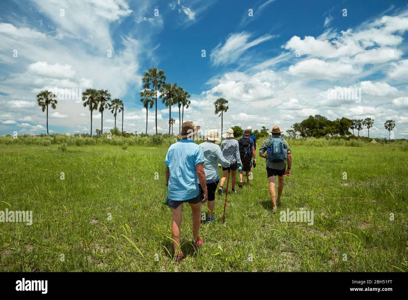 Les touristes se rendent à pied dans le Delta d'Okavango, au Botswana, en Afrique Banque D'Images